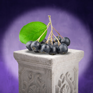 Move Over Blueberries, Cranberries and Pomegranates, Aronia Is About to Claim the American Health Spotlight